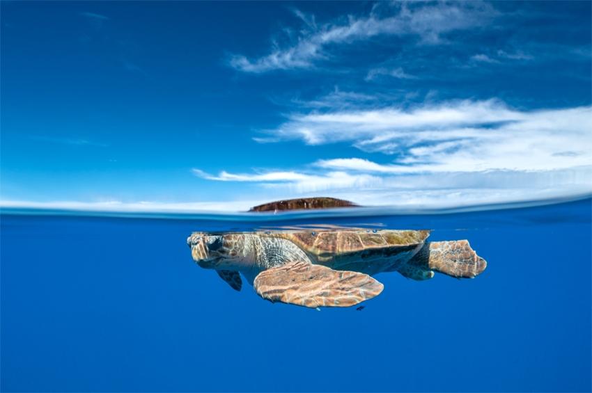 หมู่เกาะอาโซรีซประกาศพื้นที่คุ้มครองแห่งใหม่กลางมหาสมุทร