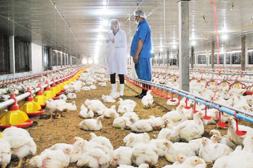 สวัสดิภาพสัตว์ (Animal Welfare)…เลี้ยงสัตว์ตามหลักการสากล