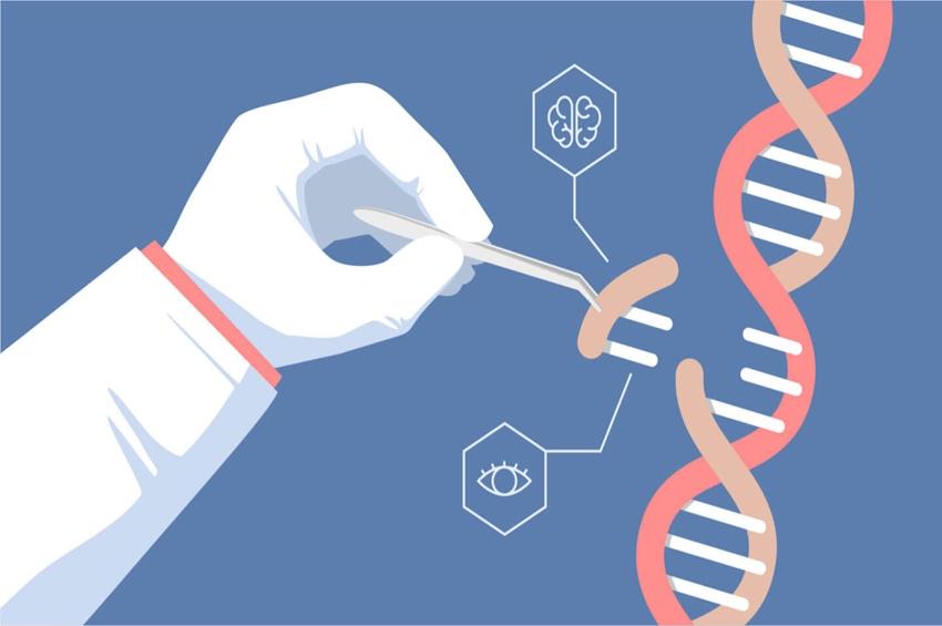Merck รับสิทธิบัตรสหรัฐ วิธีการปรับแต่งจีโนมเทคโนโลยี CRISPR